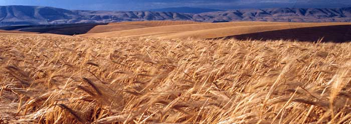 field_grain_j0377876_wide